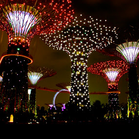 by Alex Chia - Novices Only Landscapes ( lights, supertree, gardens by the bay, night, singapore )
