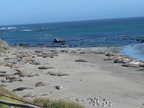 Photo: Sea lions outside San Simeon chilling out