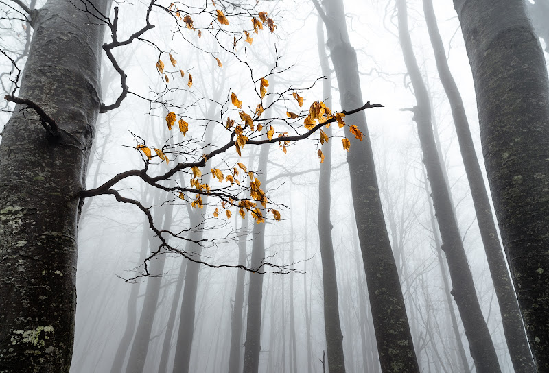 The leaves and the Fog di Matteo Vannini