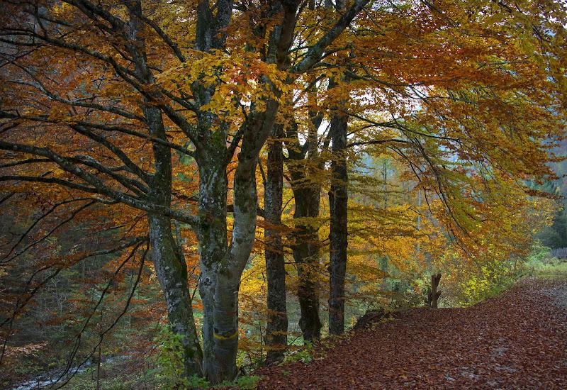 magie d'autunno   di walterferretti