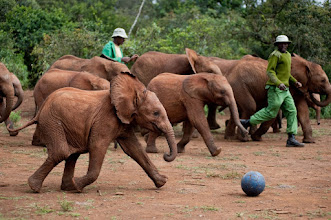 """Photo: As seen in the IMAX® 3D film """"BORN TO BE WILD,"""" baby elephants at Dame Daphne Sheldrick's elephant orphanage play soccer as a form of physical enrichment. """"BORN TO BE WILD"""" is a Warner Bros. Pictures release."""