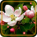 Apples Flowers LWP icon