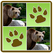 Wild Animals Memory Game Android APK Download Free By Blue Yellow Studios