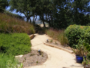 Photo: We created a system of paths stabilized by Vetiver and drylaid walls . The owners were able to grow their crops, and the Vetiver has eliminated both the potential damage from slippage and storm water, and at the same time provides cover for fauna such as birds and beneficial insects.
