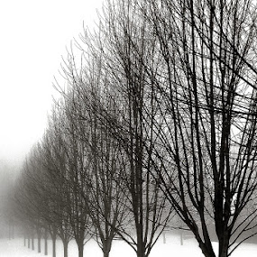 Vanishing Point by Vickie Barnhill - Landscapes Weather ( snow trees b&w )