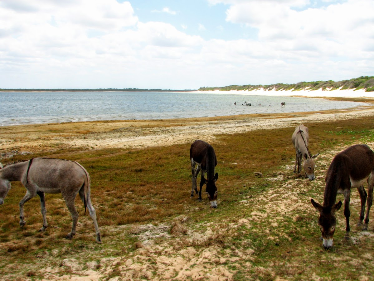 Donkeys by the beach