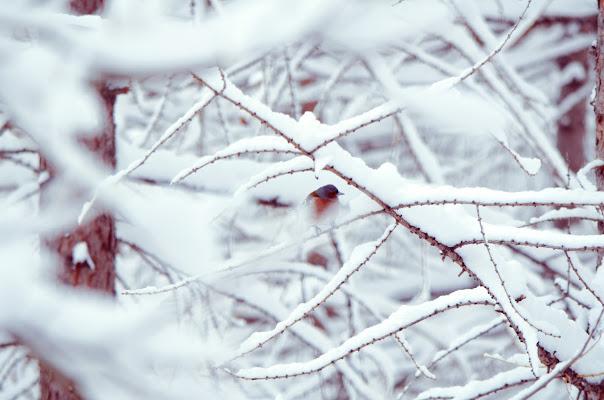 freezing time di Phuckoff