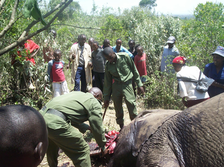 KWS officials remove tusks from an elephant killed by the residents of Olopito in Narok town..