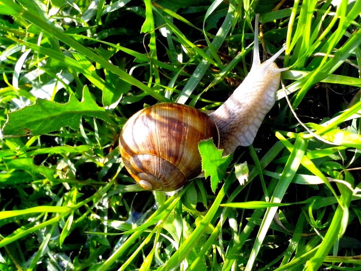 snail-in-grass-among-leaves-725x544.jpg