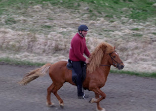 Photo: There are more than 80,000 Icelandic horses on the island.  We stopped at a Gauksmyri horse farm to learn more.
