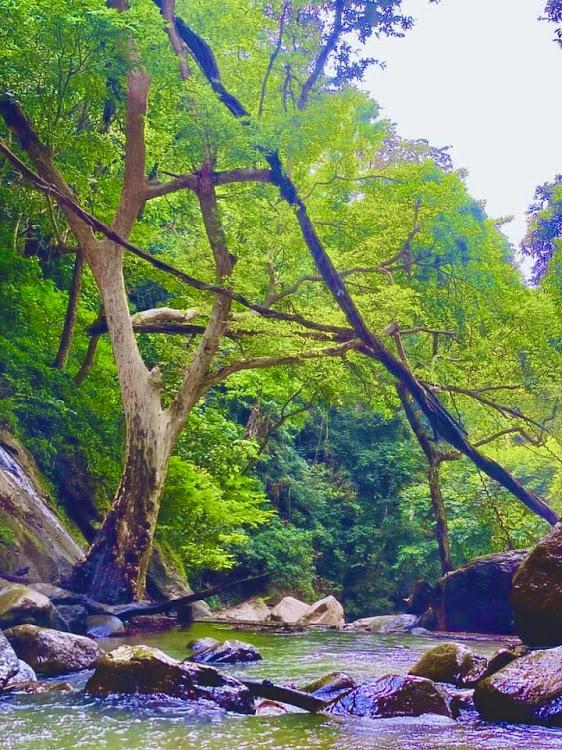 Ellewala Waterfall / Elle wala Falls / Ella wala Falls