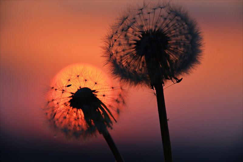 IL SOLE DENTRO di cristinababuder