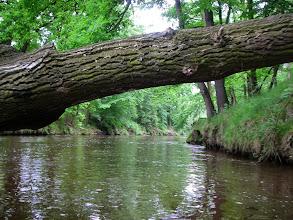 Photo: pod drzewkiem