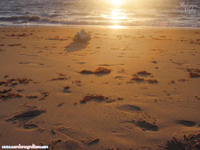 ferias praia mar sol paraiba nordeste espetaculo