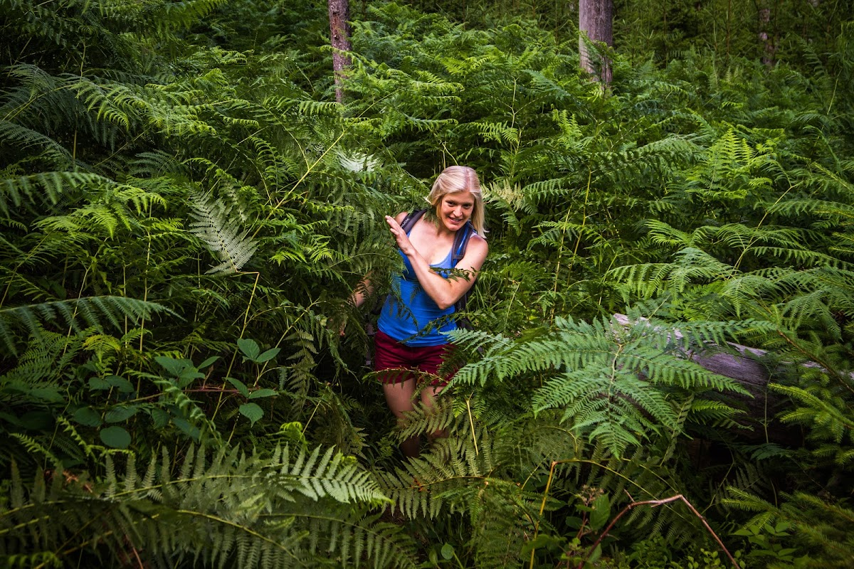 Wandern im Bannwald