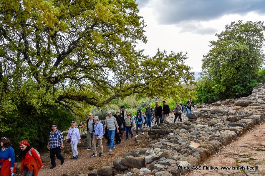 Пешеходные маршруты на севере Израиля. Заповедник Тель Дан.