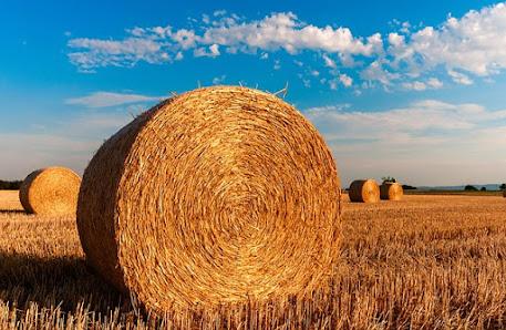 Politica agricola Comune - PAC