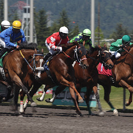 And They're Off by Darlene Neisess - Sports & Fitness Other Sports ( equine, horses, horse, action, sports, horse racing, running )
