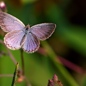 Butterfly by Sonali Majumder - Animals Insects & Spiders