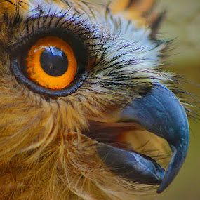Face by Hindra Komara - Animals Birds ( bird, face, pixoto, canvas, photography, animal,  )