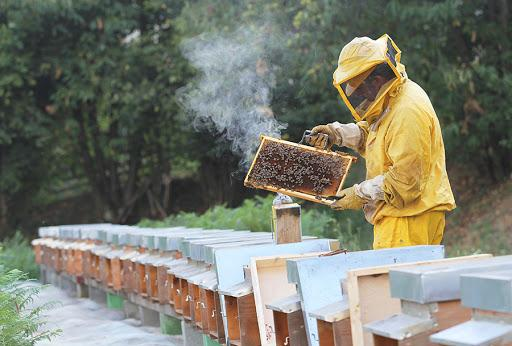 Honey Bee Farming In India - All info guide   Userspecial