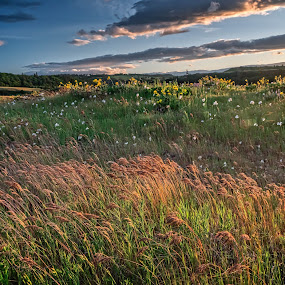 Rowena Crest Sunset by Mike Moss - Landscapes Prairies, Meadows & Fields ( oregon )