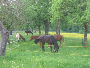 """Photo: """"Bogenreiter-Pferde"""""""