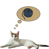 Zenka the cat widget