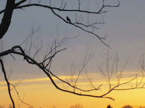 Photo: Silhouette of a bird in a tree at sunset at Eastwood Park in Dayton, Ohio.