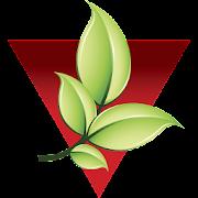 Vaccaro Agronegócios