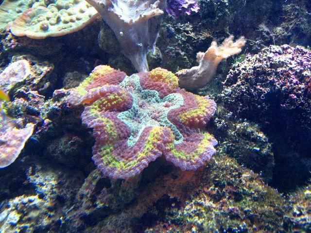 Photo: Corail fluorescent