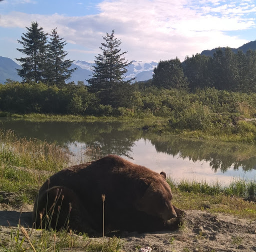 14 bear chilling.jpg - It's a bear's life. When not escaping for a stroll around town -- seriously -- this girl loves to catch some rays