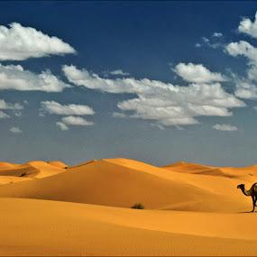 Desert Tripinn by Damjan Voglar - Landscapes Deserts