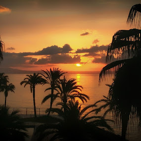 Entre Palmeras - Sunrise between Palms by Antonio Navarro - Landscapes Sunsets & Sunrises