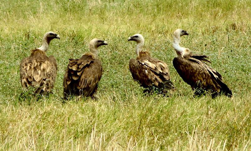 inquietanti avvoltoi di mariellaturlon