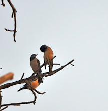 Photo: Rosy Starling