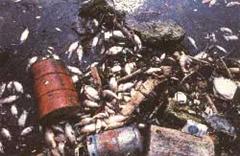 Mar poluido