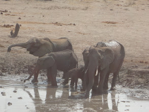 Photo: An elephant family day at the waterhole