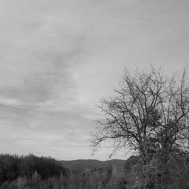 Есен by Georgi Kolev - Black & White Landscapes ( небе., природа., ден., есенен., тишина. )