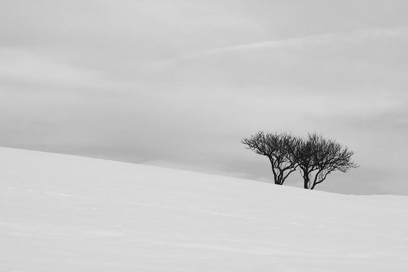 i due alberi di rino_savastano
