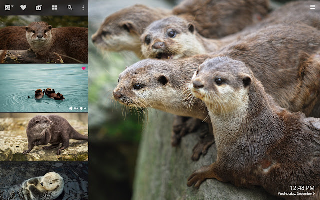 Sea Otter Hd Wallpapers New Tab Theme