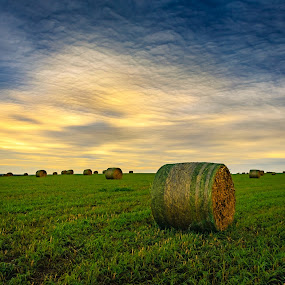Hay Bales Under Storm Clouds by Kendra Perry Koski - Landscapes Prairies, Meadows & Fields ( clouds, burke, big round bale, hay bales, green, rain clouds, winner, landscape, farming, farm, field, red, cold, autumn, fall, platt, trees, october, gold, missouri river, river,  )