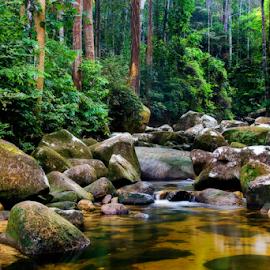 Tranquility by Steven De Siow - Landscapes Forests ( landscape photography, forest, nature, tranquility, landscape,  )