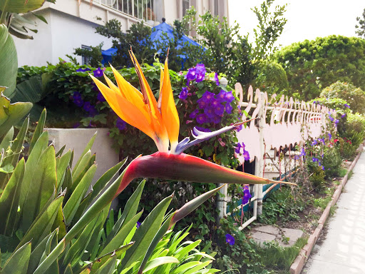 Bird-of-paradise.jpg - A bird of paradise spotted along the canals of Venice, California.
