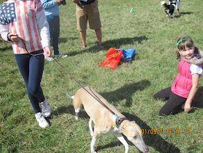 Photo: Henry Whippet and Holly (in the pink gilet)
