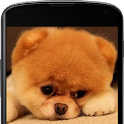 Cute Puppy Live Wallpaper icon