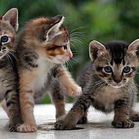 wahab wahub wahib <3 by Nydzam Ahmad - Animals - Cats Kittens