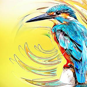 kingfisher-px.jpgwebsiteweb.jpg
