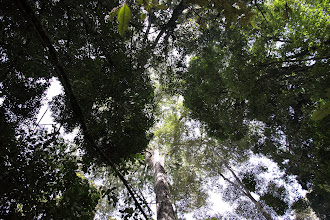 Photo: Looking up the canopy.