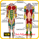 Download Body Reflexology Point For PC Windows and Mac